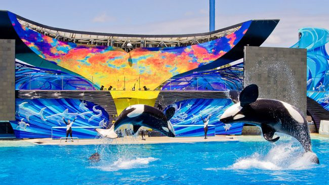5 Awesome Things to Do at SeaWorld San Diego